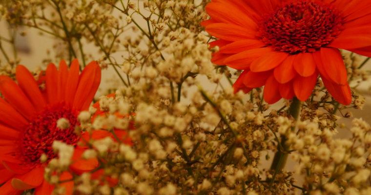 Un automne sous différentes coutures.